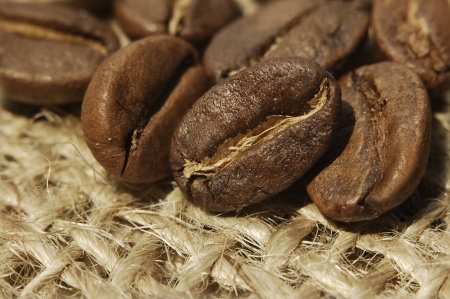 Closeup of coffee beans on canvas. Coffee bean on macro ground canvas background. Arabic roasting coffee - ingredient of hot beverage. photo