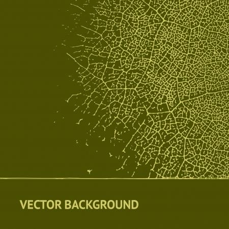 macro leaf: Leaf on vintage background  Vector illustration, contains transparencies