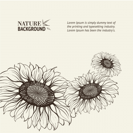 sunflower drawing: Illustration of sunflower  Vector illustration, contains transparencies, gradients and effects