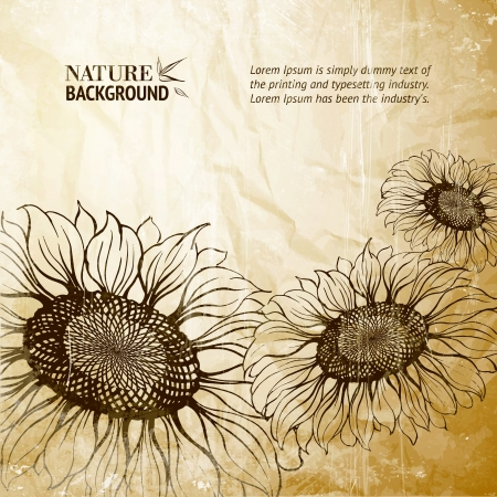 Illustration of sunflower  Vector illustration, contains transparencies, gradients and effects  Stock Vector - 18738314