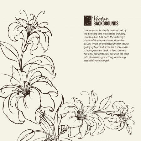 white lily: Blooming lilies over sepia background  Vector illustration