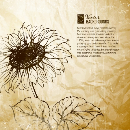 Illustration of sunflower  Vector illustration, contains transparencies, gradients and effects  Vector