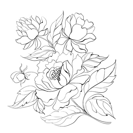 Ink Painting of Peony Vector