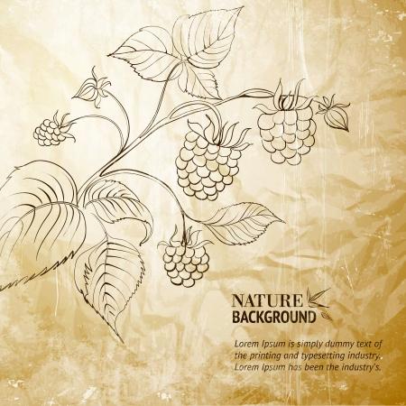 raspberry: Raspberry branch
