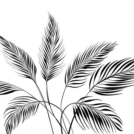 leaf curl: Palm tree isolated over white  Vector illustration