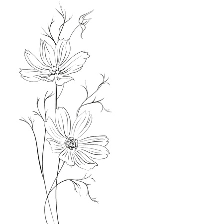 buttercup flower: Buttercup flower Illustration