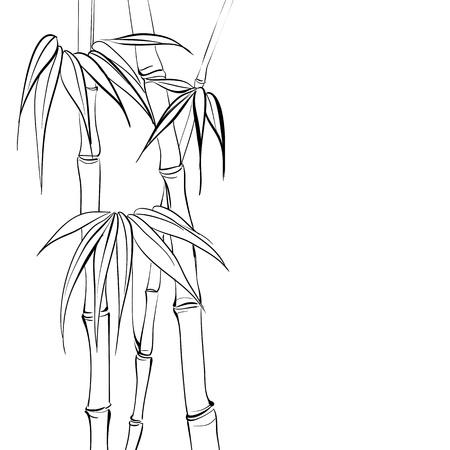 dessin noir blanc: Bambou