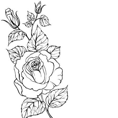 flowers close up: Black silhouette of rose Illustration
