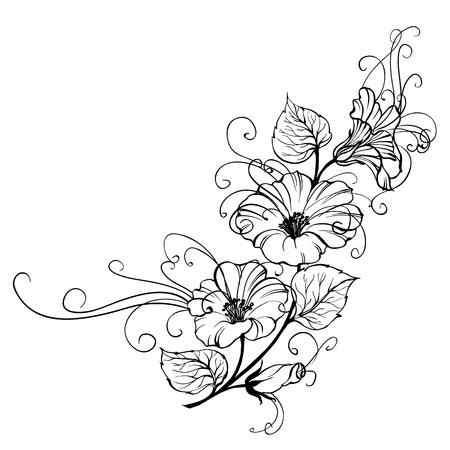 muguet fond blanc: Liseron fleur