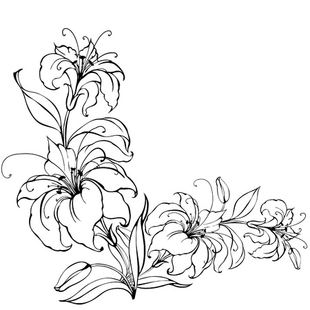 outline drawing: Lily flower Illustration