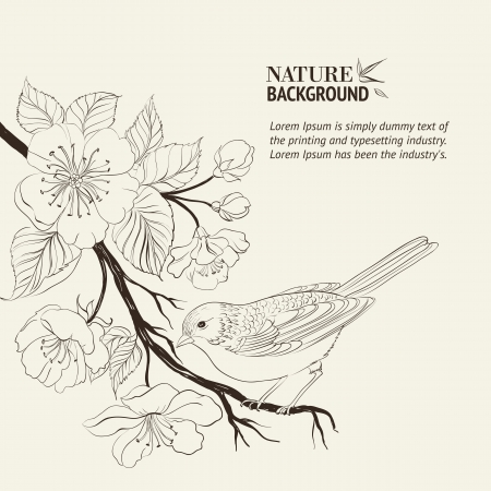 retro illustration: Hand drawn bird on Sakura branch
