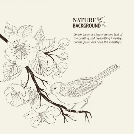 P�ssaro desenhado m�o no ramo Sakura Ilustra��o