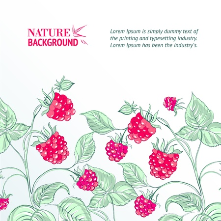 Raspberry, watercolor  Vector illustration, contains transparencies, gradients and effects  Stock Vector - 18823053