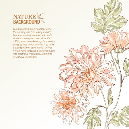 Branch of Chrysanthemum  Vector illustration  Vector