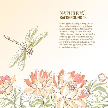 white lotus flower: Lotus flower and dragonfly