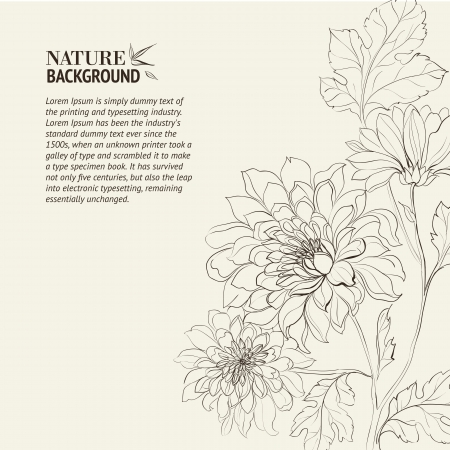 botanical branch: Branch of Chrysanthemum  Vector illustration  Illustration