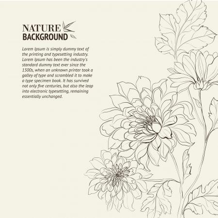 Rama de Chrysanthemum ilustración vectorial