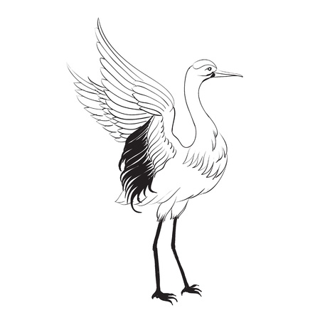wrinkly: Heron isolated over white  Vector illustration  Illustration