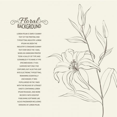 lily flower: Lily bloem geà ¯ soleerd over white Vectorillustratie