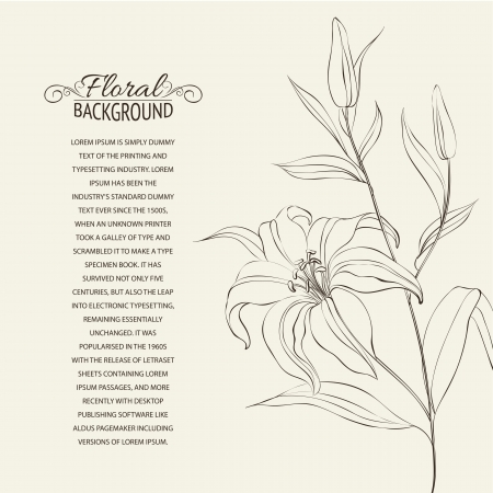Lily flower isolated over white  Vector illustration Vector