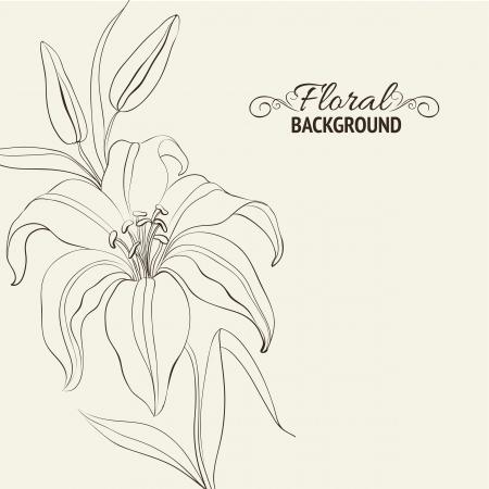 lirio blanco: Flor del lirio aislado más de blanco Ilustración vectorial