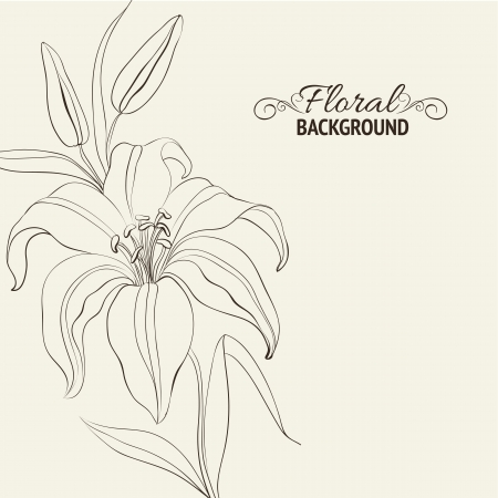 lily vector: Lily flower isolated over white  Vector illustration Illustration