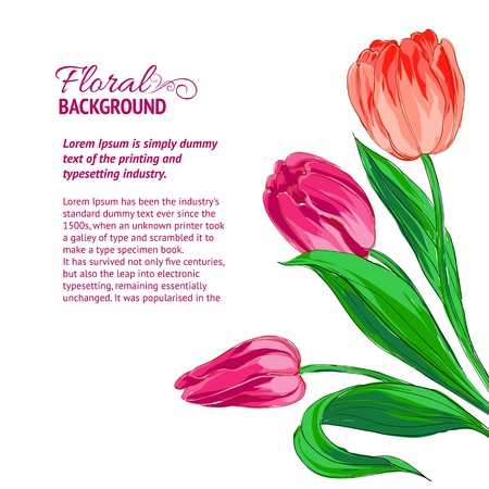 vector sample: Red tulips and sample text  Vector illustration  Illustration