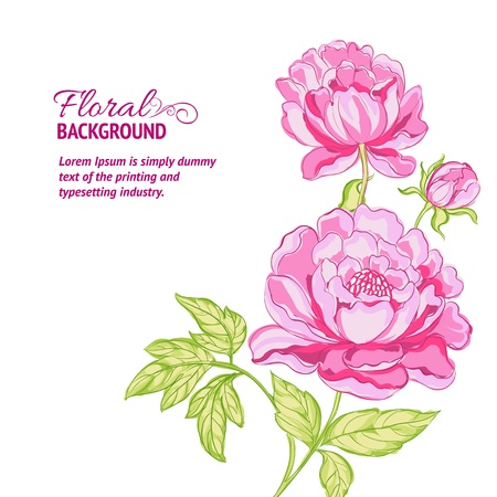peony: Pink peonies background with sample text  Vector illustration