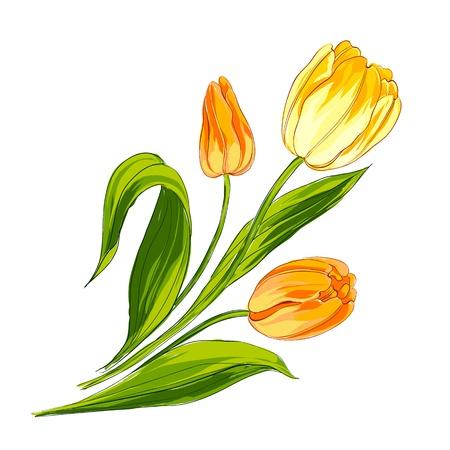 Ramo de tulipanes aislados en blanco Ilustración vectorial