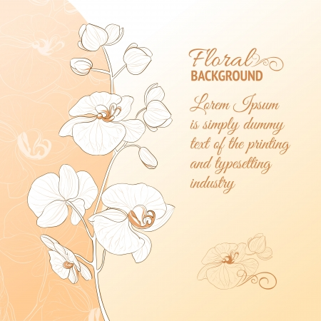 white orchid: Orchid flower card  Vector Illustration