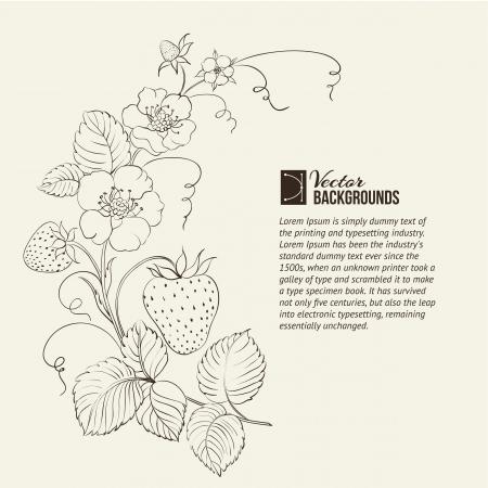 strawberry plant: Strawberries brunch over sepia background illustration