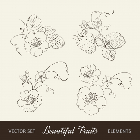 Strawberry elements isolated on white background Stock Vector - 19836827
