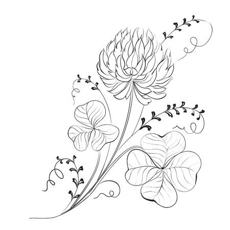 white clover: Clover flowers isolated on white background illustration