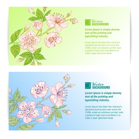 Two sakura banners  Vector illustration  Vector