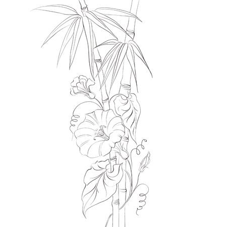 bindweed: Bindweed flower and bamboo isolated over white illustration