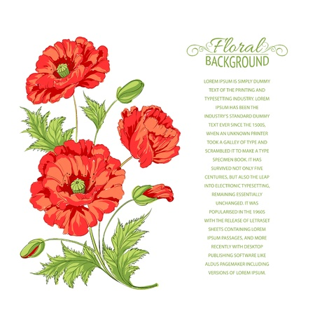 Red poppy card illustration  Stock Vector - 19877281