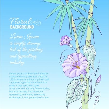bindweed: Bindweed flower and bamboo on blue background illustration  Illustration