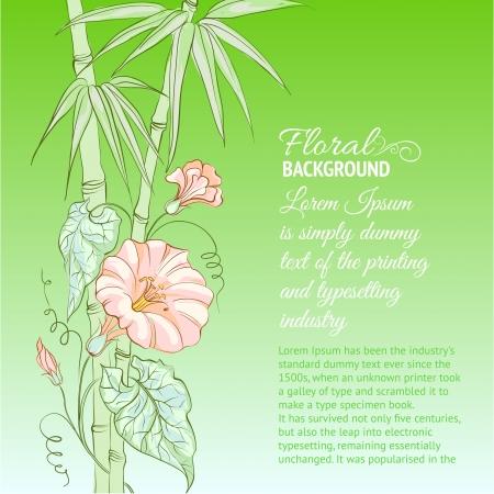 convolvulus: Bindweed flower and bamboo on blue background illustration  Illustration