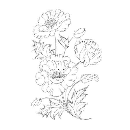 Poppies flower freehand isolated on a white background illustration
