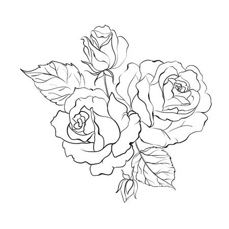 Bouquet of roses isolated on white background illustration  Illustration