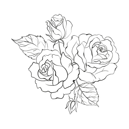rosa: Bouquet of roses isolated on white background illustration  Illustration