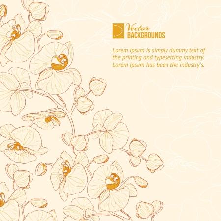 Tiquette de fleur d'orchidée Banque d'images - 20105844