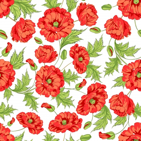 Pattern of poppy flowers on a white background illustration  Vector
