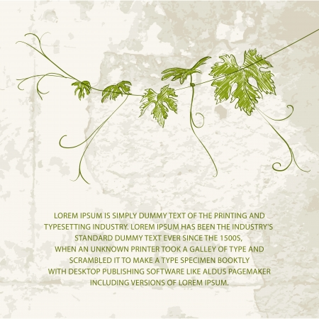 red grape: Branch of vine climbing against concrete wall illustration  Illustration