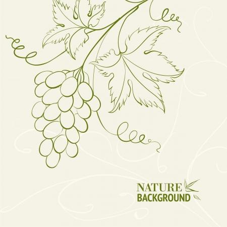 Grape wine card illustration