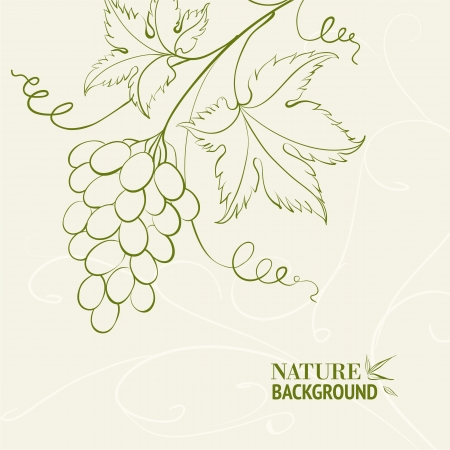 bunch of grapes: Grape wine card illustration