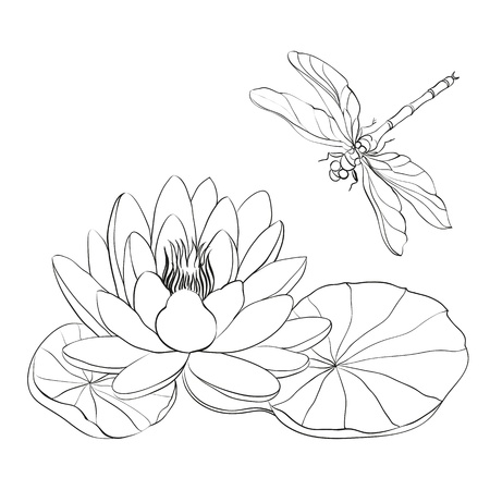 garden pond: Water Lily and dragonfly isolated over white illustration  Illustration