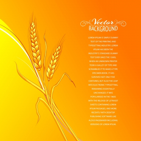 Ears of wheat on orange background  Vector illustration  Vector