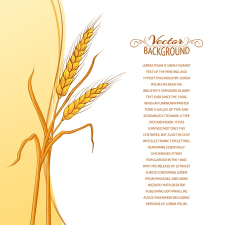 Wheat ear card  Vector illustration  Çizim