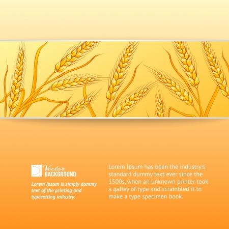 Rye ears on orange background  Vector illustration  Stock Photo